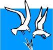 鸟的天堂1016,鸟的天堂,动物,