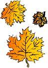 秋天0015,秋天,季节,枫叶 叶片