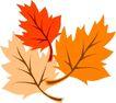 秋天0054,秋天,季节,秋叶 树叶