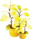 种植0292,种植,植物,