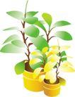 种植0294,种植,植物,