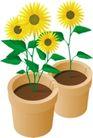 种植0302,种植,植物,