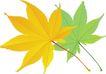 种植0325,种植,植物,