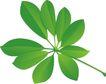 种植0330,种植,植物,