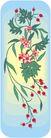 鲜花1461,鲜花,植物,
