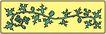 鲜花1508,鲜花,植物,