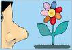 鲜花1510,鲜花,植物,