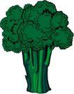 野果1002,野果,植物,