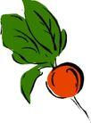 生野菜0813,生野菜,饮料食品,