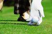 高尔夫运动0064,高尔夫运动,运动,高尔夫 运动 草坪