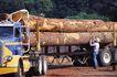 工业世界0025,工业世界,工业,卡车 木头 运输