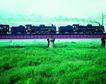 现代火车0056,现代火车,工业,草地 车厢 运货