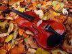 小提琴0079,小提琴,艺术,落叶 情调 感受