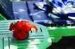 巴黎岛温泉0162,巴黎岛温泉,休闲保健,花儿