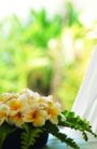 巴黎岛温泉0178,巴黎岛温泉,休闲保健,清新花卉 盆花 绿叶搭配