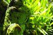 巴黎岛温泉0190,巴黎岛温泉,休闲保健,植物 青叶 流水
