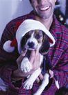 节日活动0015,节日活动,生活方式,哈巴狗 喜爱 人类朋友 忠诚 宠物