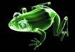 X光世界0059,X光世界,未来科技,黑色背景 绿青蛙 三维形象