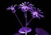 X光世界0094,X光世界,未来科技,花朵 植物 科技