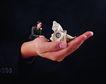 电子商务0072,电子商务,未来科技,手掌 钞票 玩转