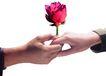 电子商务0079,电子商务,未来科技,爱情 给予 鲜花