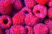 鲜味食物0082,鲜味食物,农业,鲜美 美味 农业