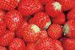 鲜味食物0084,鲜味食物,农业,草莓 鲜艳 美味