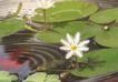 SPA物件0067,SPA物件,休闲保健,睡莲 荷花 莲叶