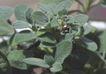 SPA物件0075,SPA物件,休闲保健,鲜绿 植物 枝叶