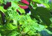 SPA物件0076,SPA物件,休闲保健,绿色 叶子 茂盛