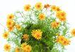 SPA物件0086,SPA物件,休闲保健,花朵 鲜艳 靓眼