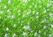 SPA物件0089,SPA物件,休闲保健,花丛 大片 美容