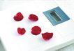 SPA物件0091,SPA物件,休闲保健,花瓣 红色 玫瑰