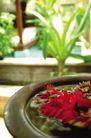 醉心巴厘岛SPA0068,醉心巴厘岛SPA,休闲保健,绿色 盆景 植物