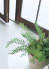 生活空间0061,生活空间,休闲生活,盆栽 绿色 植物