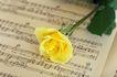 情人礼品0031,情人礼品,休闲生活,玫瑰 绿叶 五线谱
