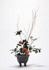 情人礼品0066,情人礼品,休闲生活,花盆 盆栽 绿叶