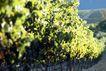 葡萄酒0004,葡萄酒,休闲生活,绿色 生态 环境