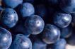 葡萄酒0027,葡萄酒,休闲生活,果粒 丰收 实物