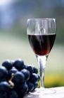 葡萄酒0039,葡萄酒,休闲生活,