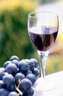 葡萄酒0044,葡萄酒,休闲生活,葡萄酒