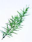 花草茶饮0030,花草茶饮,休闲生活,绿色 细叶 生物