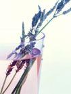 花草茶饮0041,花草茶饮,休闲生活,花枝