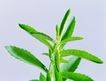 花草茶饮0050,花草茶饮,休闲生活,绿色植物