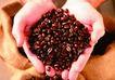 咖啡赏味0071,咖啡赏味,休闲生活,手捧 暗红 咖啡豆
