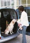 女性宠物0050,女性宠物,休闲生活,车子