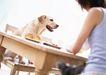 家庭宠物0045,家庭宠物,休闲生活,桌子