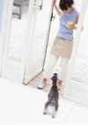 家庭宠物0073,家庭宠物,休闲生活,开门 黑色 狗尾