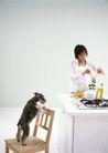 家庭宠物0074,家庭宠物,休闲生活,狗爬 木椅 靠背