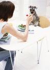 家庭宠物0075,家庭宠物,休闲生活,喂养 宠物狗 狗食